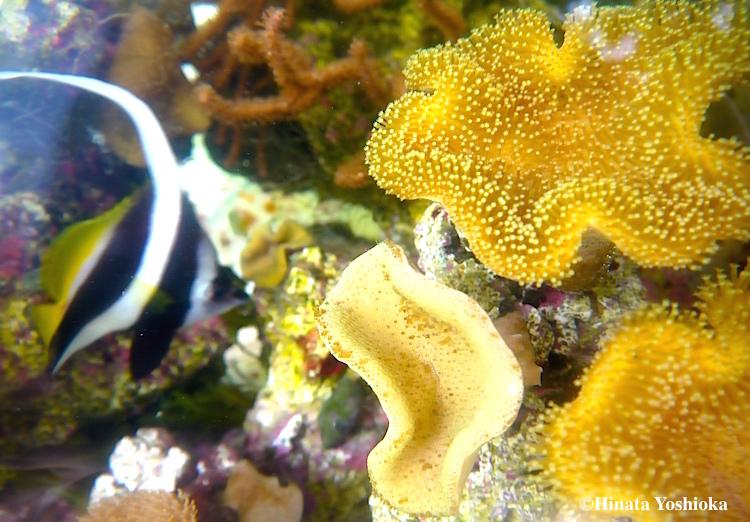 魚サンゴ のコピー